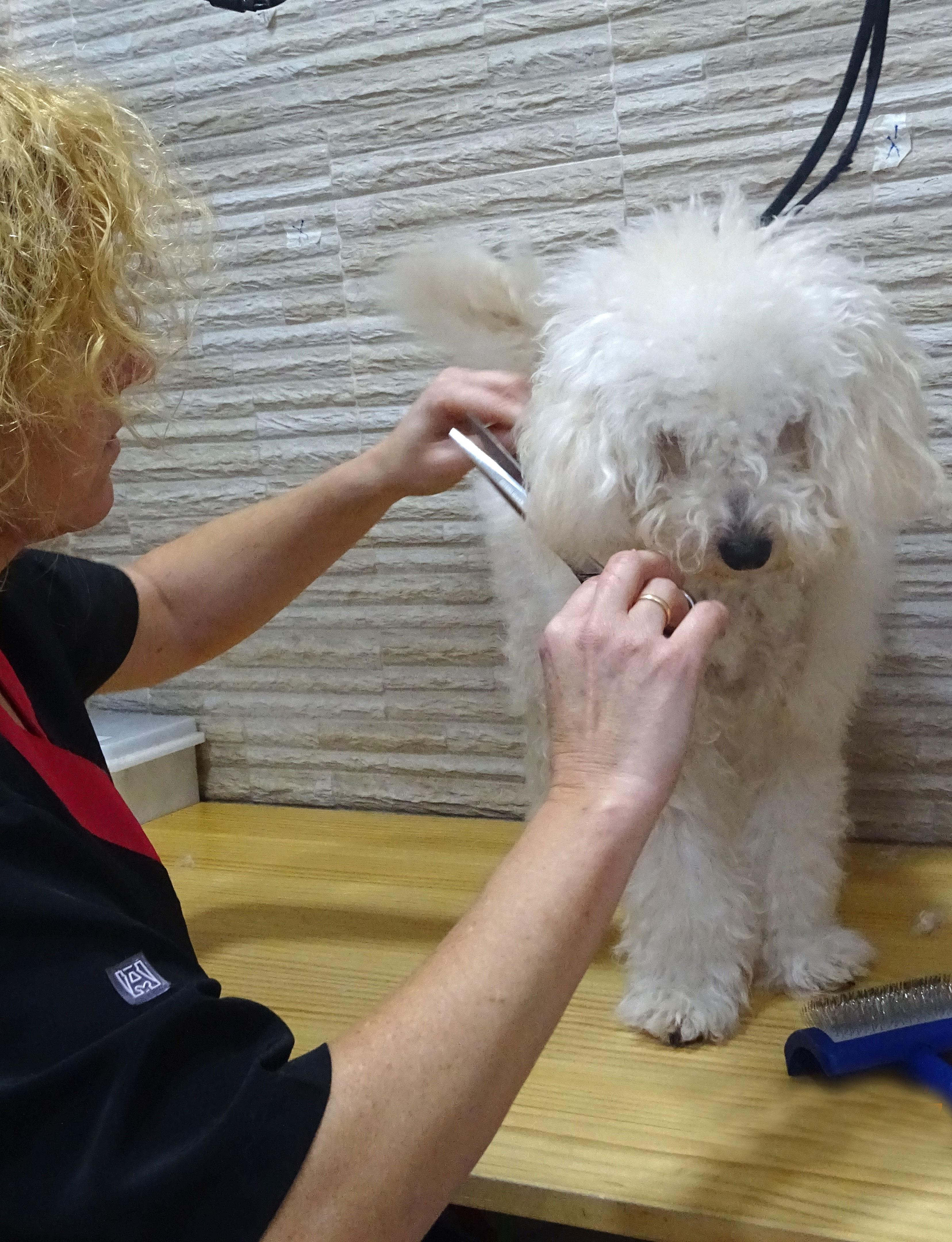 mika-veterinaria-bermeo-clinica-exoticos-peluqueria-perro-corte